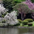 Photos: 御苑上之池にて