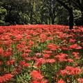 Photos: 野川公園にて