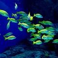 Photos: 魚群