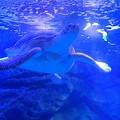 Photos: 水族館の人気者