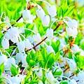 白い小さなお花達