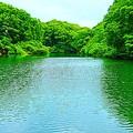 Photos: 森の中の池
