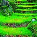 Photos: 苔の階段