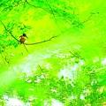 Photos: 緑の中の宝石