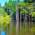 Photos: 湖面の木立