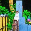 Photos: 妖猫