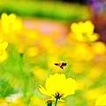 ハチが飛ぶ