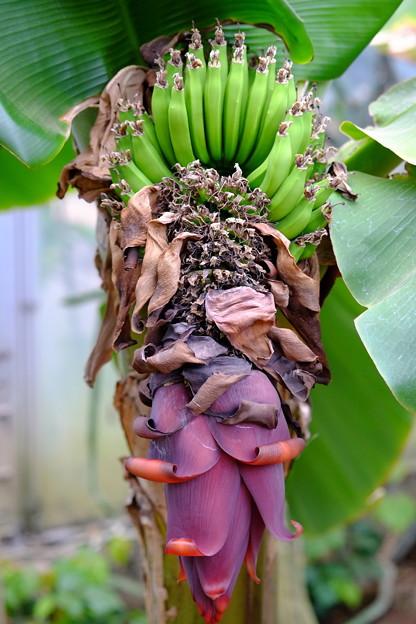 緑のバナナと花?