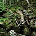 Photos: 樹林帯