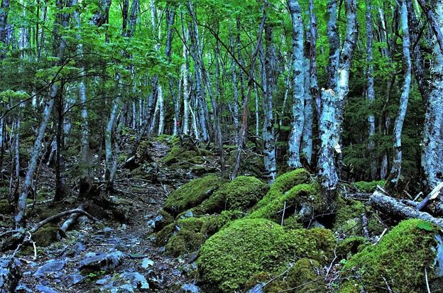 Photos: 樹林帯 2