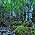 樹林帯 2