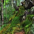 苔 覆う登山道