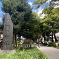 Photos: 氷川神社参道