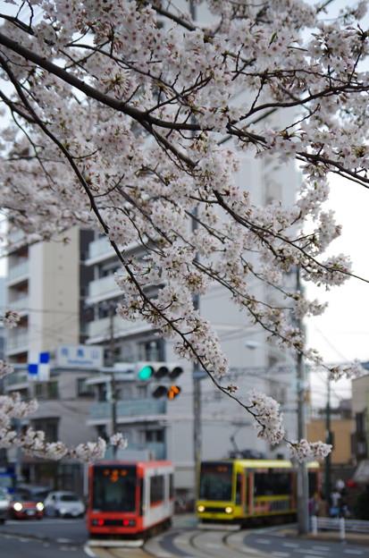 東京さくらトラム