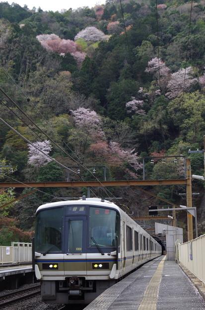 保津峡駅を見守る山桜
