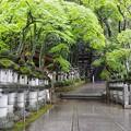 Photos: 新緑 神社