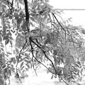 Photo: 光と木々