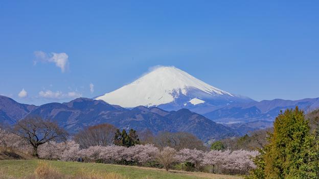 富士山と春めき桜