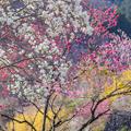 Photos: 美しい桃源郷