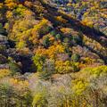 西ノ湖の紅葉