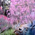 牛と天満宮-大阪府藤井寺市:道明寺天満宮