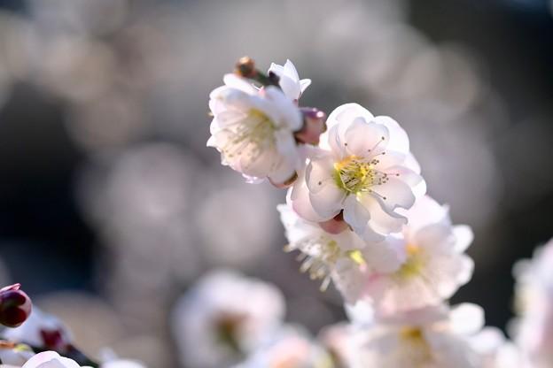 季節の移ろい-大阪府藤井寺市:道明寺天満宮