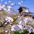 春爛漫-奈良県大和郡山市:郡山城址