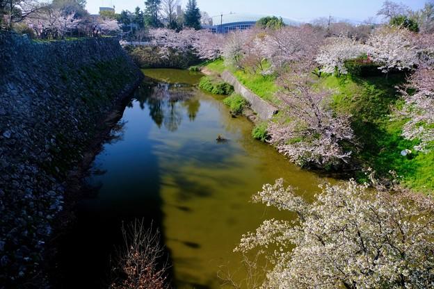 城と高校-奈良県大和郡山市:郡山城址