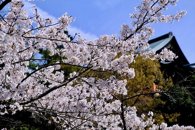 信貴山のお寺さん-奈良県平群町:信貴山朝護孫子寺