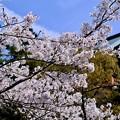 Photos: 信貴山のお寺さん-奈良県平群町:信貴山朝護孫子寺
