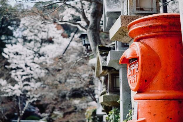 さくら色-奈良県平群町:信貴山朝護孫子寺