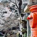 Photos: さくら色-奈良県平群町:信貴山朝護孫子寺