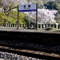 桜咲く駅へ-京都府笠置町:JR笠置駅