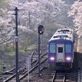 Photos: さくら列車-京都府笠置町:JR笠置駅