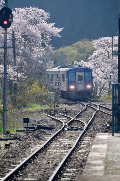 今年の桜-京都府笠置町:JR笠置駅