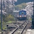 Photos: 今年の桜-京都府笠置町:JR笠置駅