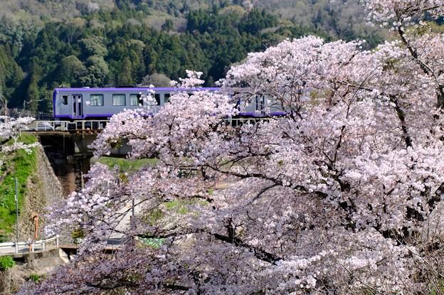 「桜」「駅」「列車」-京都府笠置町:JR笠置駅