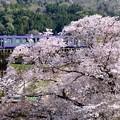 Photos: 「桜」「駅」「列車」-京都府笠置町:JR笠置駅