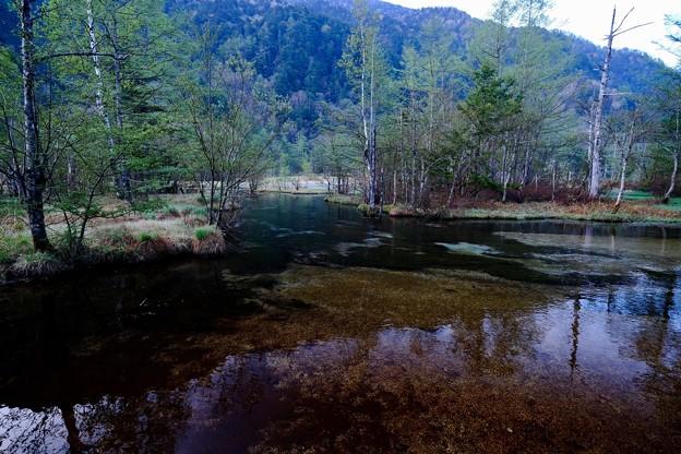 穏やかな池-長野県松本市:上高地・田代池