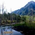 原生林の中に佇む湿原-長野県松本市:上高地・岳沢湿原