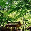 厳かな空気感-京都市左京区:貴船神社