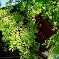 Photos: 緑に酔う-京都市左京区:鞍馬寺