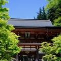 溢れる陽光-京都市左京区:鞍馬寺