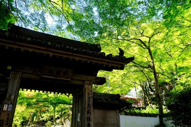 今年も新緑を求めて-大阪府岸和田市:大威徳寺