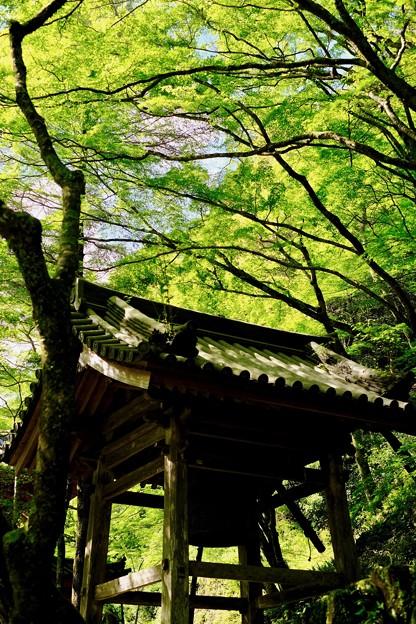 大好きな被写体-大阪府岸和田市:大威徳寺