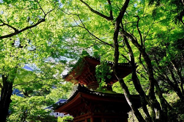風薫る五月-大阪府岸和田市:大威徳寺