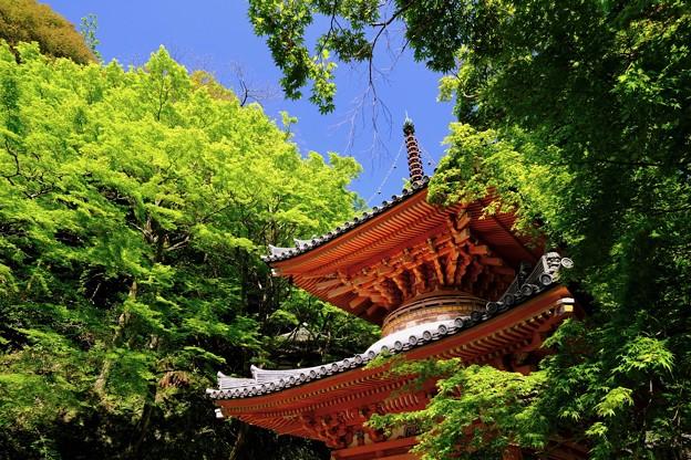 美しい対比-大阪府岸和田市:大威徳寺