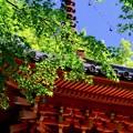 三つの大阪-大阪府岸和田市:大威徳寺