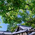 女人高野を訪ねて-大阪府河内長野市:金剛寺