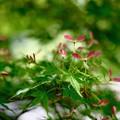 赤いプロペラ-大阪府河内長野市:金剛寺